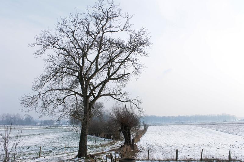 winterlandschap 2