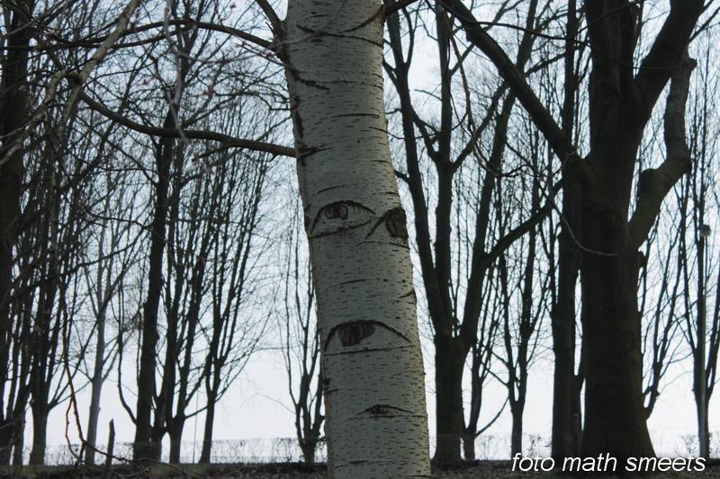 bomen ogen 1