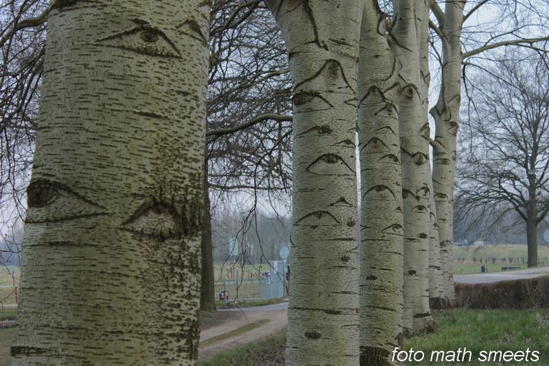 bomen ogen 2
