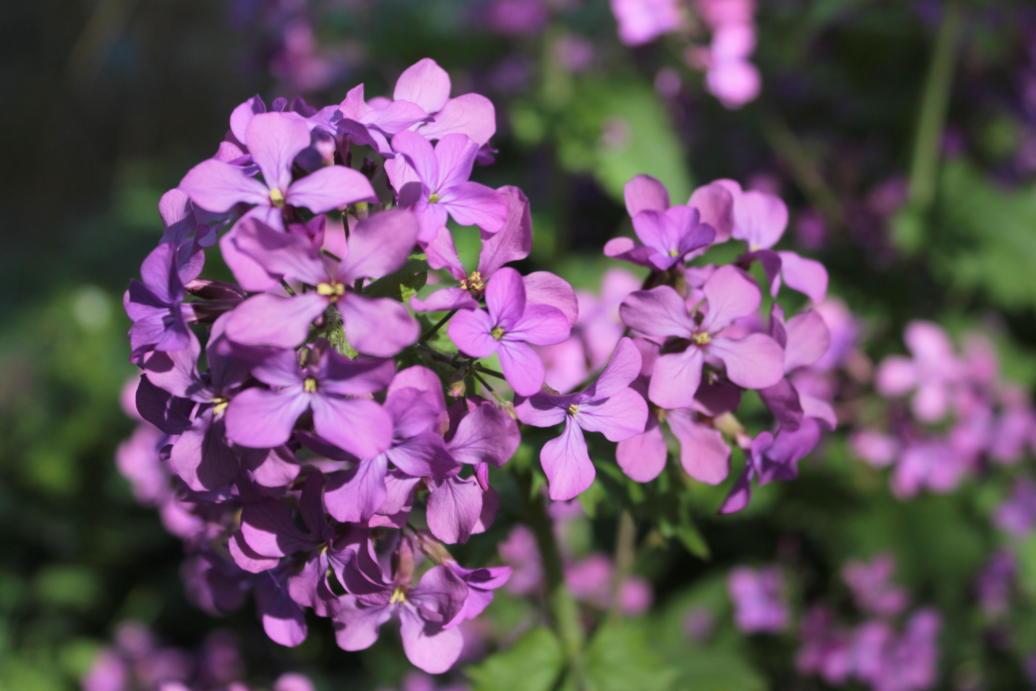 Voorjaarsbloemen 11
