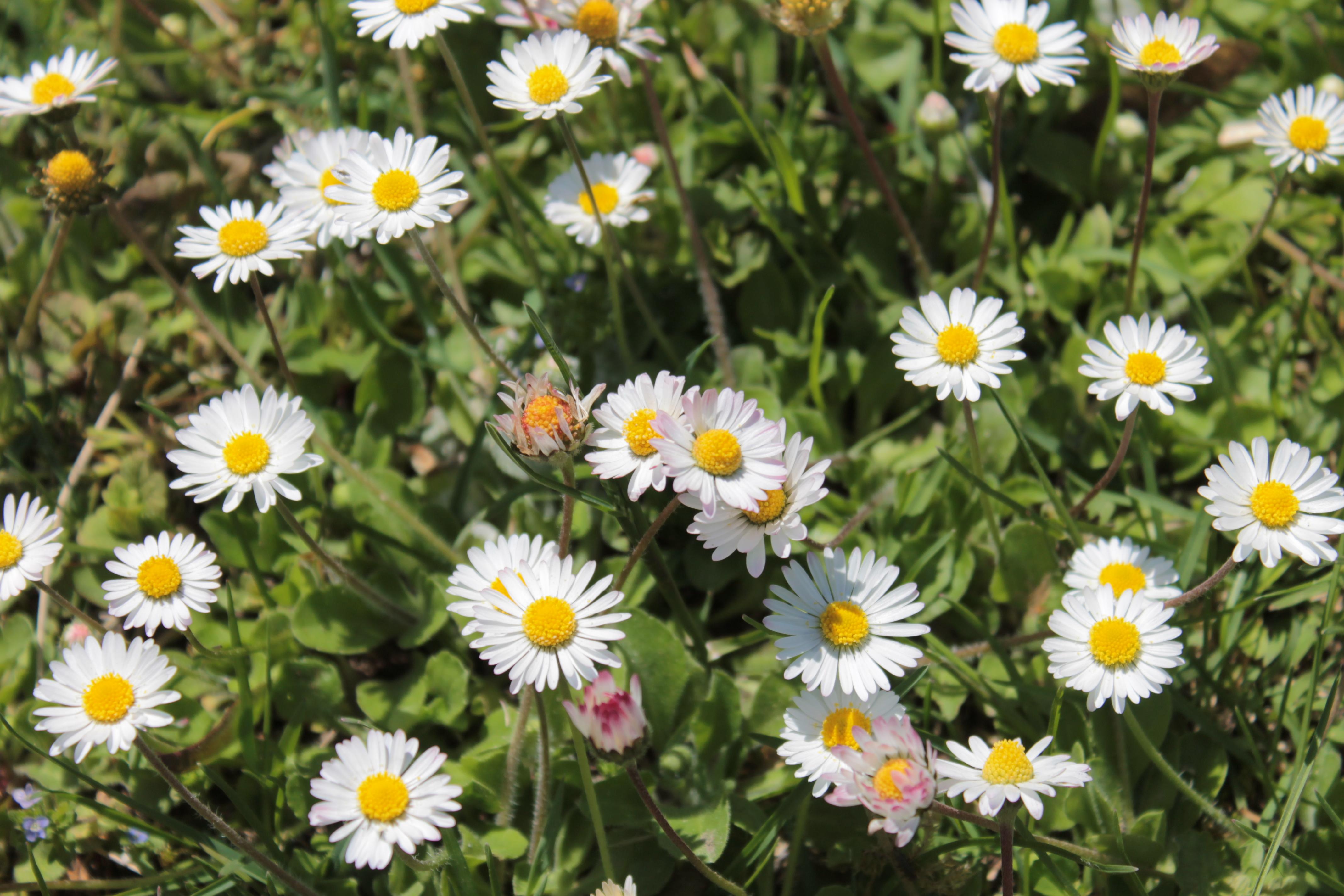 Voorjaarsbloemen 16