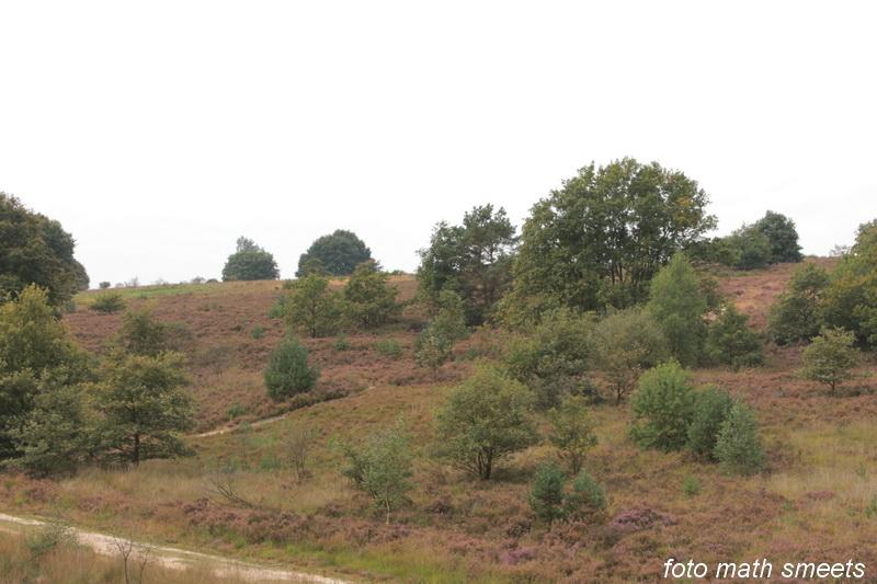 Mechelse Heide 027