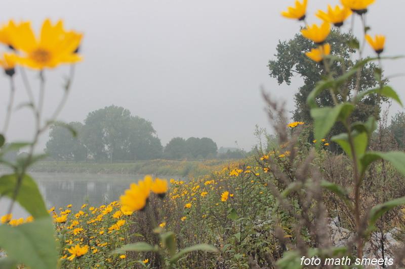 gele bloemen (4)