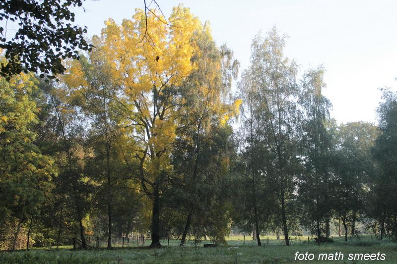 herfstzon (1)