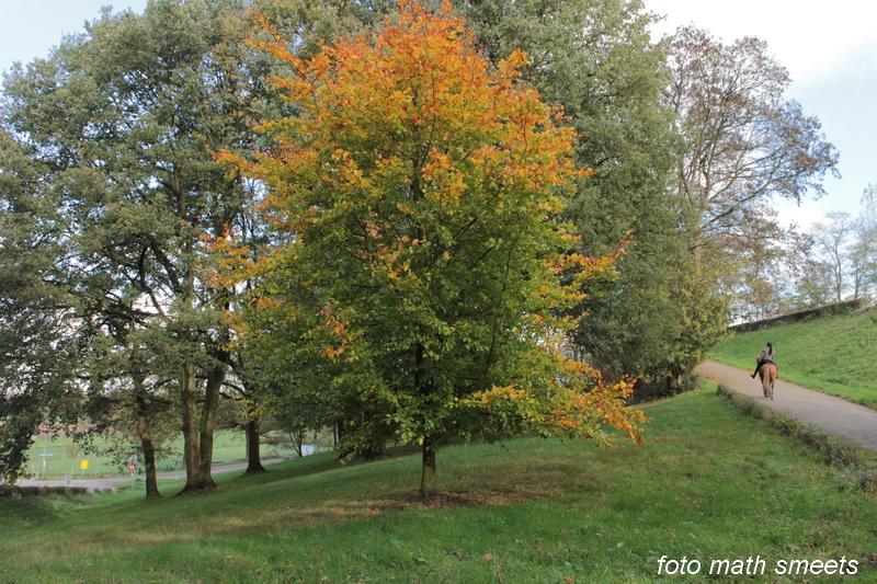 bomen herfst (1)