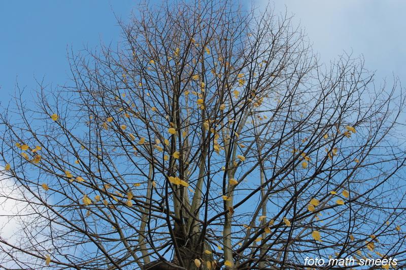 bomen herfst (2)