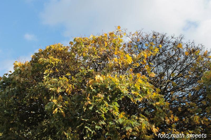bomen herfst (3)
