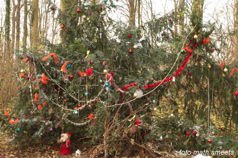 in het bos bij de paters, tegenover het kerkhof, staat een taxus helemaal opgetuigd als kerstboom, zelfs met kribje en kerstman?