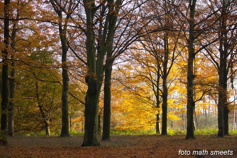 late herfst (1)