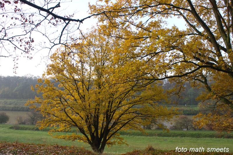 late herfst (2)