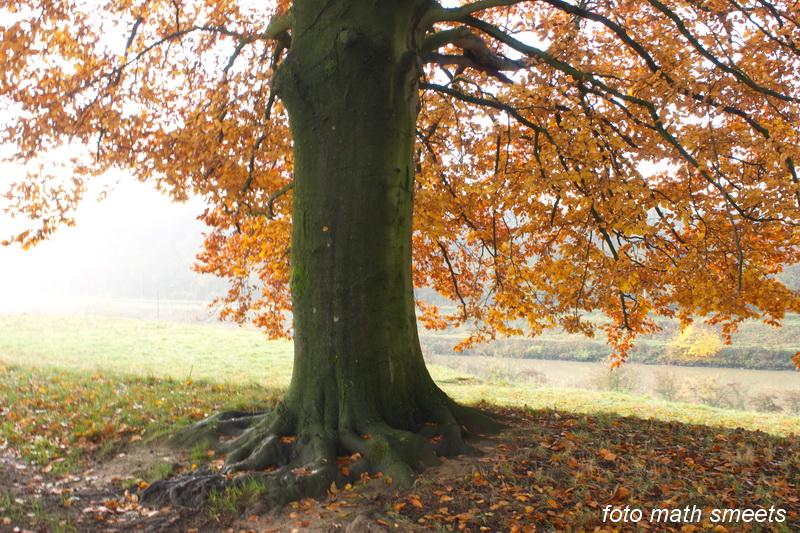 late herfst (3)