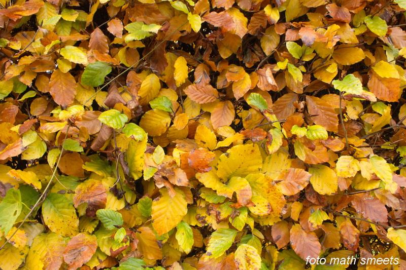 late herfst (4)