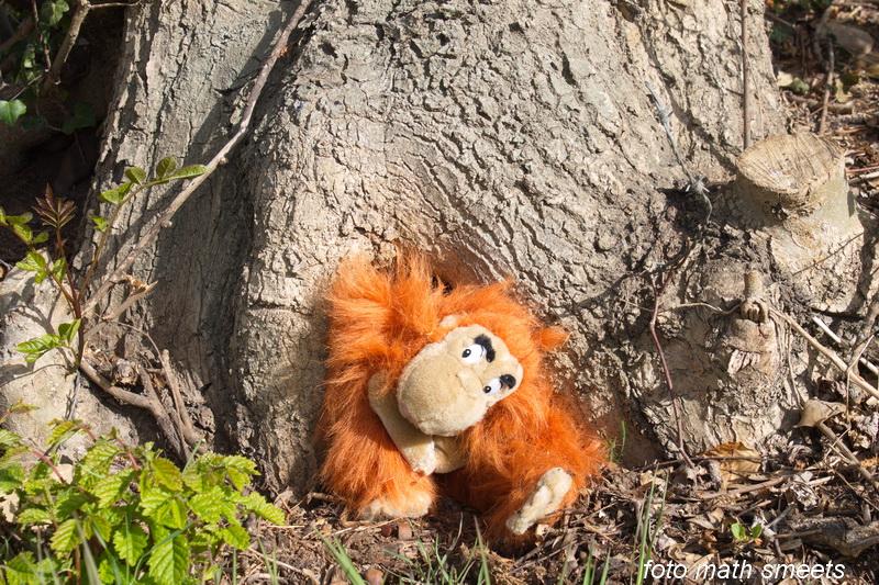 en hier komt de aap uit de boom