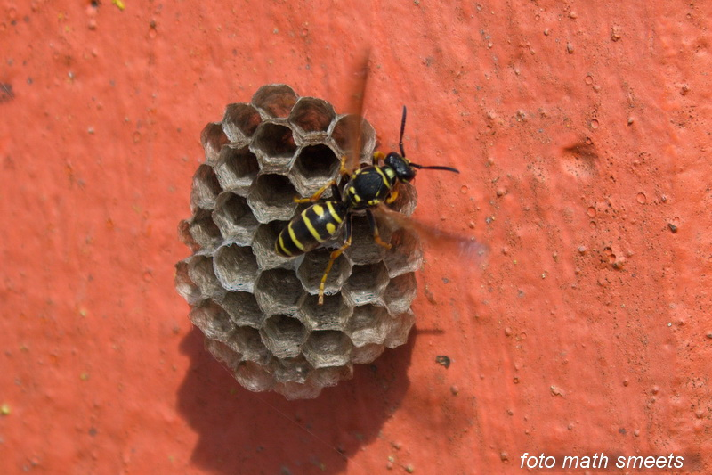 het begin van een wespennest op een klein betonnenpaaltje