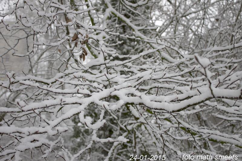sneeuw 24-1-15  2